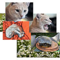 chat&tortue