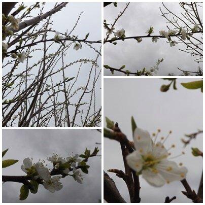 Jardin avril (12)