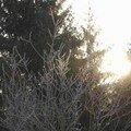 Lever du soleil ce matin sur la campagne