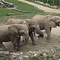 R. D. CONGO - Le retour des Eléphants dans le Parc National des Virunga