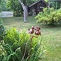 - dans mon jardin - avant l'hiver -
