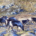 17-10-08 Sortie Montagne et rennes (116)