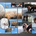 Givre et neige janvier 2009 - 16