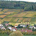 Ballade entre vignes et forêt par un bel après-midi ensoleillé