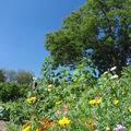 2008 08 18 Mes fleurs et le soleil