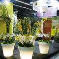Stand interflora pour show du s.i.a.