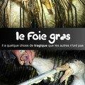 Le foie gras , cruauté bientôt illégale en europe?