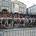 Boeuf gras à Bazas, jeudi 7 février 2013
