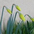 Un avant gout de printemps