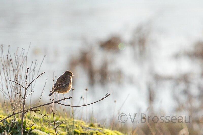 oiseau-loire14-03