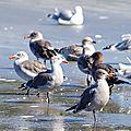 Birds Ruby Beach