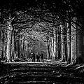 Forêt de rambouillet - les tribulations d'un photographe, très amateur... (2013)