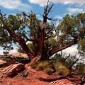 J6- Dead Horse Point_09