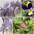 Fleurs mai 2013 (12)