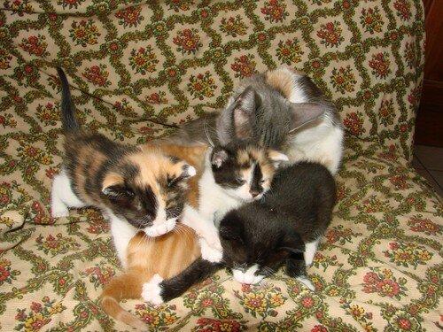 2008 04 10 Papillon avec 4 de ses chatons a bientôt 1 mois