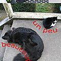 Chien et chat, et l'amour