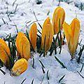 Fête de imbolc - 2 février - le rituel