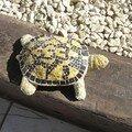 tortue en mosaïque 001