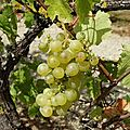 <b>Septembre</b>, le temps des vendanges
