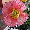 bouquet 2016 001