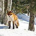 Concours photo d'hiver france 3