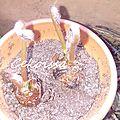 Nous testons les treffles à <b>semer</b> de Radis et Capucine