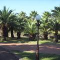 Palmier o mon palmier, Jeju