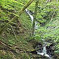 Circuit du bois de Bartelère 720m – Saint-Pierre-de-Mésage 38220