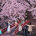 Sous les cerisiers en fleurs [#gangdescouturièresdispersées : la relève]