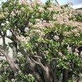 <b>Kew</b> <b>Gardens</b> - Plantes du désert