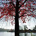 Lac Christus 0112153