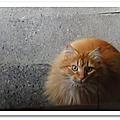 Le chat derrière la porte