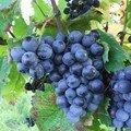 VdV#8: un Bordeaux sans merlot ni cabernet!