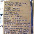Descriptif de l'arbre à BAYIR