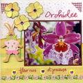 06- Orchidée -Juin 2008