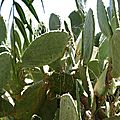 cactus taggé