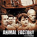 Animal Factory (Les fauves rentrent au bercail)