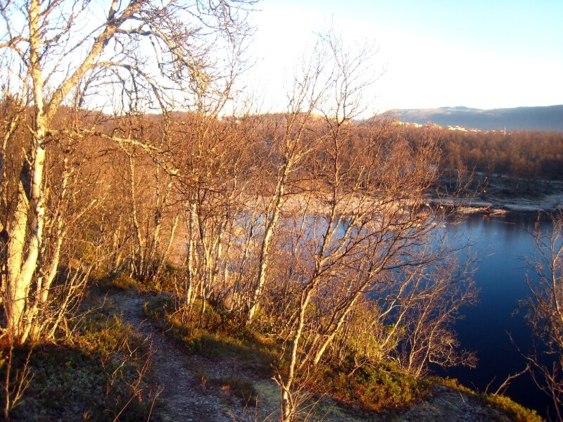 lac et bouleaux