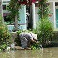 Rives du Mekong
