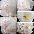 Ciel 10 06 & fleurs (23)