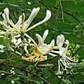 Fleurs de Leon 24061630