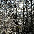 Photos JMP©Koufra 12 - Le Caylar - 01122017 - 116