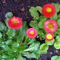 Fleurs de printemps!