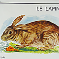 Collection ... <b>Affiche</b> <b>scolaire</b> LE CHEVAL / LE LAPIN