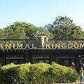 Animal kingdom - jour 1