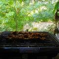 Kebabs d'agneau