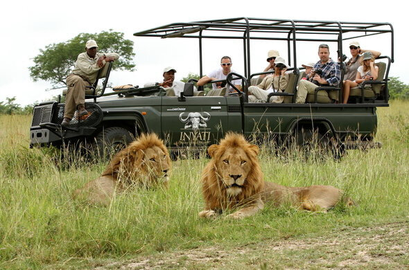inyati-safari-game-drive-590x390