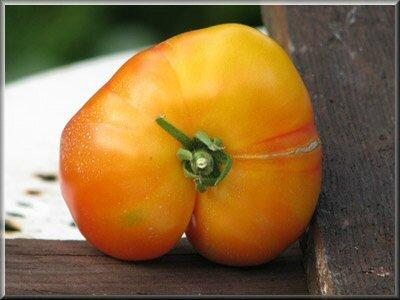 14 - tomate joyau d'oaxaca - www.passionpotager.canalblog.com