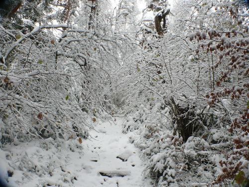 2008 10 30 Voici le chemin pour monter au sommet du Pic du Lizieux !