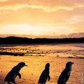 Phillip Island (16)